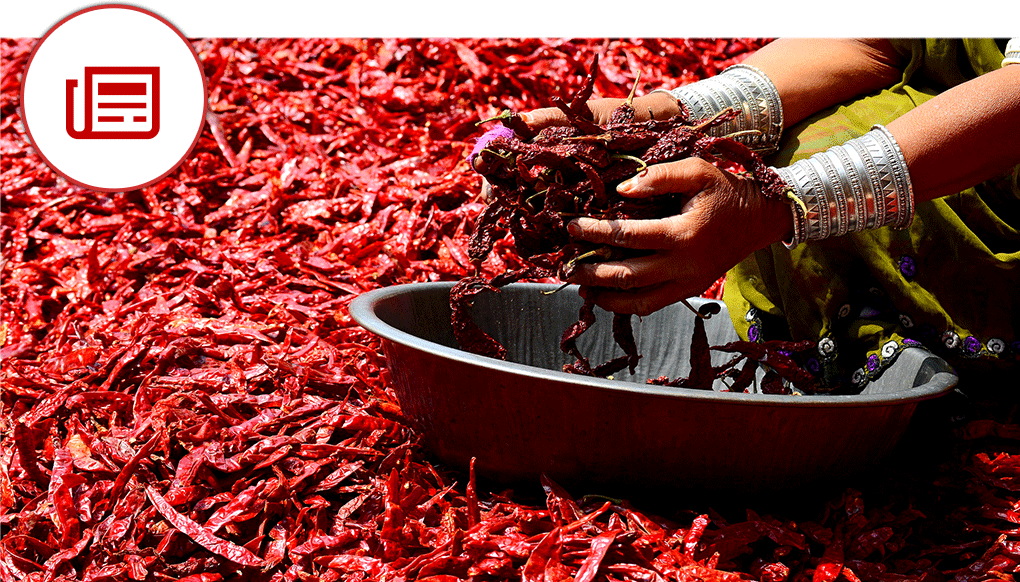 Hands with red chili background